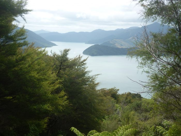 Queen Charlotte Sound: rugged and beautiful.
